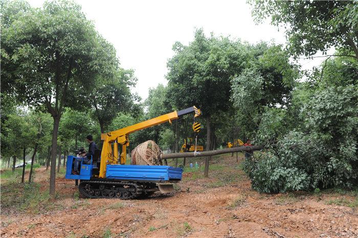 吊运机将树木从圃地向外运输