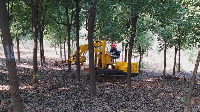 挖树机在苗圃地自由行走