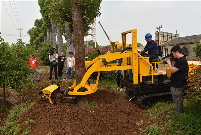 起挖30公分的大树