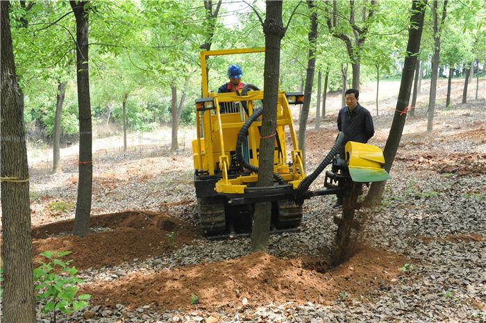 挖树机挖树现场
